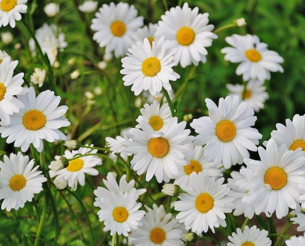 Daisies to brighten up a day!